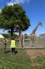 Yorkshire Wildlife Park VIP Trip - Feeding the Giraffes