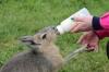 Yorkshire Wildlife Park VIP Trip - Feeding Mara Jack & Jill