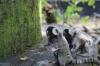Yorkshire Wildlife Park VIP Trip - Marmoset madness.....
