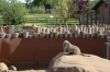 Yorkshire Wildlife Park VIP Trip - Meerkats on sentry duty