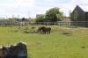 Yorkshire Wildlife Park VIP Trip - Black Rhinos