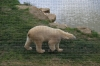 Yorkshire Wildlife Park VIP Trip - Polar Bears
