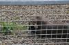 Yorkshire Wildlife Park VIP Trip - Feeding Giant Otters Mora & Alexandra