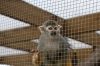 Yorkshire Wildlife Park VIP Trip - Giving the Squirrel Monkeys a treat