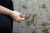 Berlin - Danielle handfeeding sparrows in Alexanderplatz