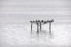 Swan Bay, Queenscliff, Victoria