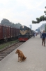 BR BEM20 6107 waits departure from Noapara with 53 0600 Khulna - Benapole Commuter