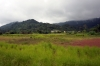 Scenery on the Yaounde to Douala line