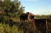 Kalamata Shed, unidentified steam loco