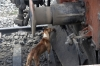 A desparate dog licks bits off the buffer beam of SPJ WDM3D 11509 while its stabled at Saharsa Jn