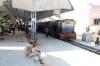 GWL NDM5 #805 at Gwalior Jn after arrival with 52174 0615 Sabalgarh - Gwalior Jn