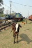 IZN YDM4s 6601 & 6603 in the carriage sidings at Pilibhit Jn