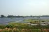 Thiruvarumbur Lake near Thiruvarur, Tamil Nadu
