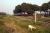 GD WDM2 16727 at Maharajganj with 55178 1600 Maharajganj - Duraundha Jct