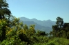Between Jatinga & Mailongdisa, Assam, while travelling by passenger train 15693 0425 Lumding Jct - Silchar