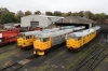Nene Valley Railway Class 31 60th Anniversary Diesel Gala - Wansford (L-R) 31285/31162, 31108/31452 & 31465/31459
