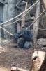 Warsaw Zoo, Poland