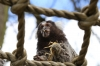 Yorkshire Wildlife Park VIP Trip May 2018 - feeding Marmosets live crickets