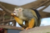 Yorkshire Wildlife Park VIP Trip May 2018 - Squirrel Monkeys