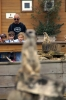 Meerkats - Yorkshire Wildlife Park