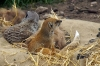 Mongoose & Meerkat - Yorkshire Wildlife Park