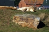 Lions - Yorkshire Wildlife Park